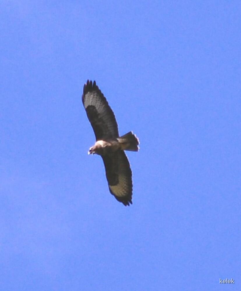 Eagle 1 by kelek