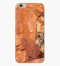 A Black-flanked Rock Wallaby iPhone Case