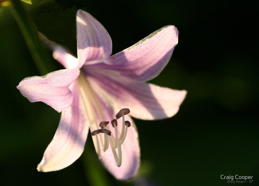 Hosta Flower I by Craig Cooper