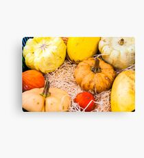 Variety of colorful autumn pumpkins on the market Canvas Print