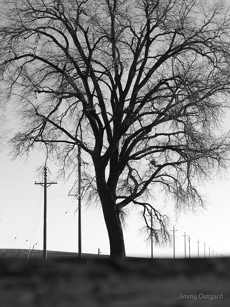 Tree by Jimmy Ostgard