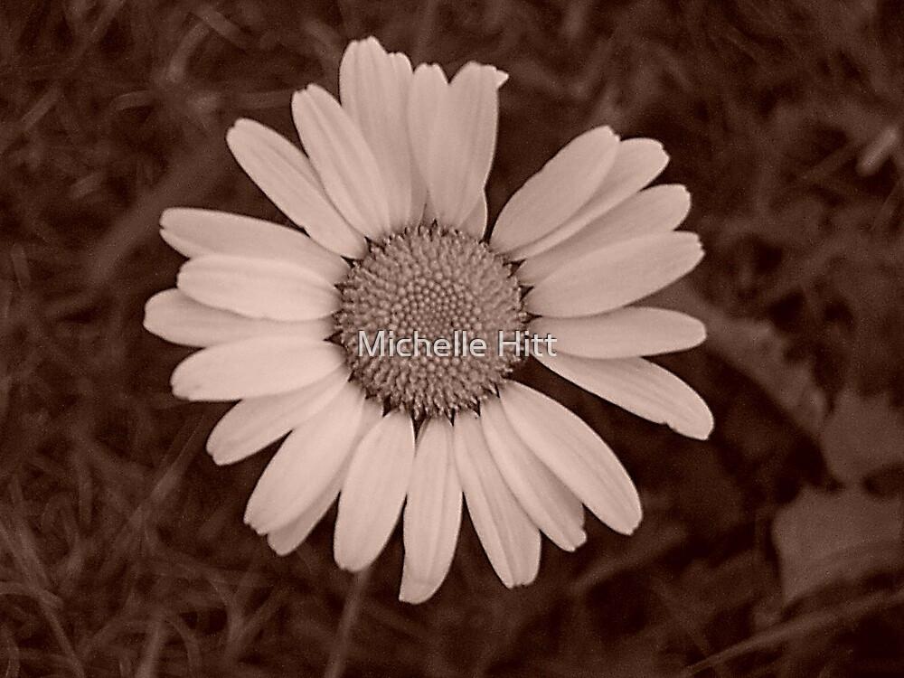Daisy by Michelle Hitt