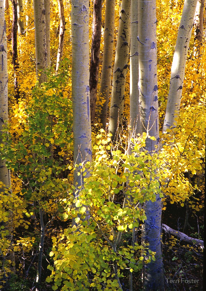 Touch of Gold by Terri Foster