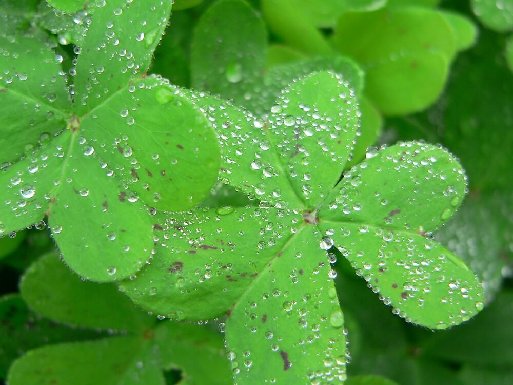 Dew on Leaves by Jacko