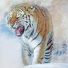Siberian Tiger in snow by Brian Tarr