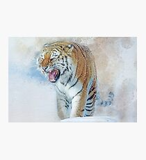 Siberian Tiger in snow Photographic Print