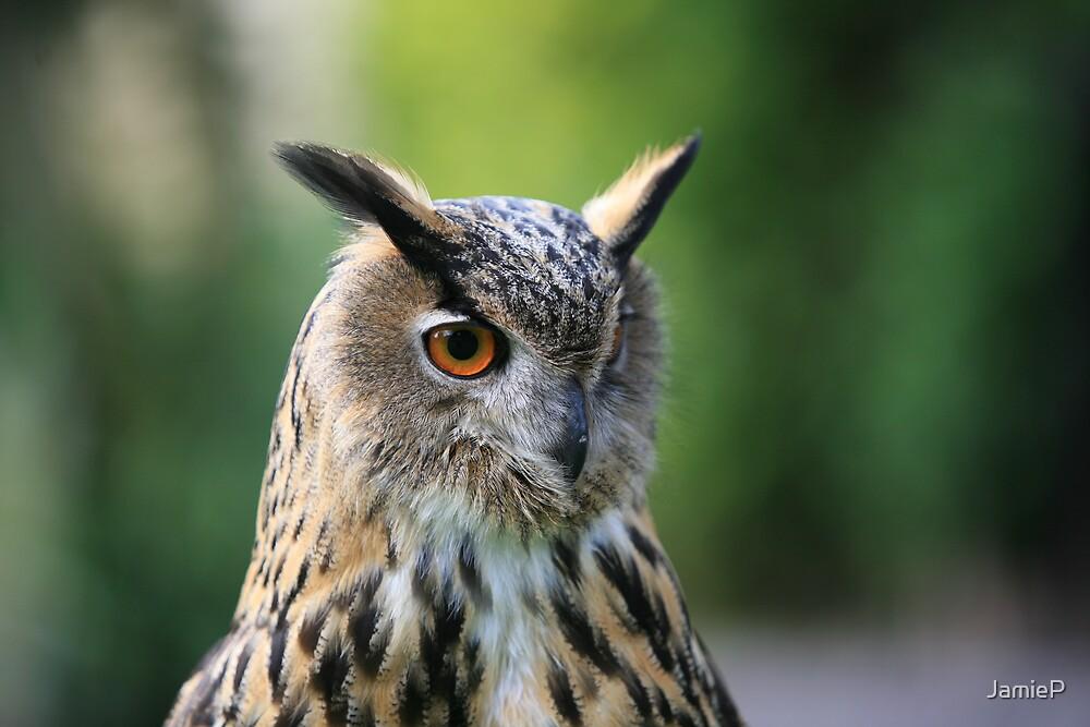 Eagle Owl by JamieP
