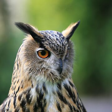 Eagle Owl by JamieP