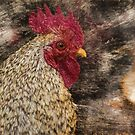 """""""Queen of the Chicken Coop"""" - this is my best side. by © Kira Bodensted"""