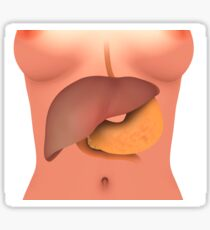 Conceptual image of human digestive system in female body. Sticker