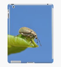 Insect macro photography iPad Case/Skin