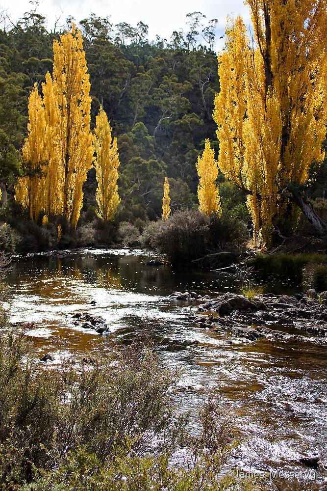 Autumn Poplars by James  Messervy