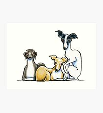 Italian Greyhound Trio Art Print