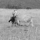 Lion Hunt by HelenBanham