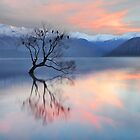 Pink Sky at Lake Wanaka by Peter Hammer