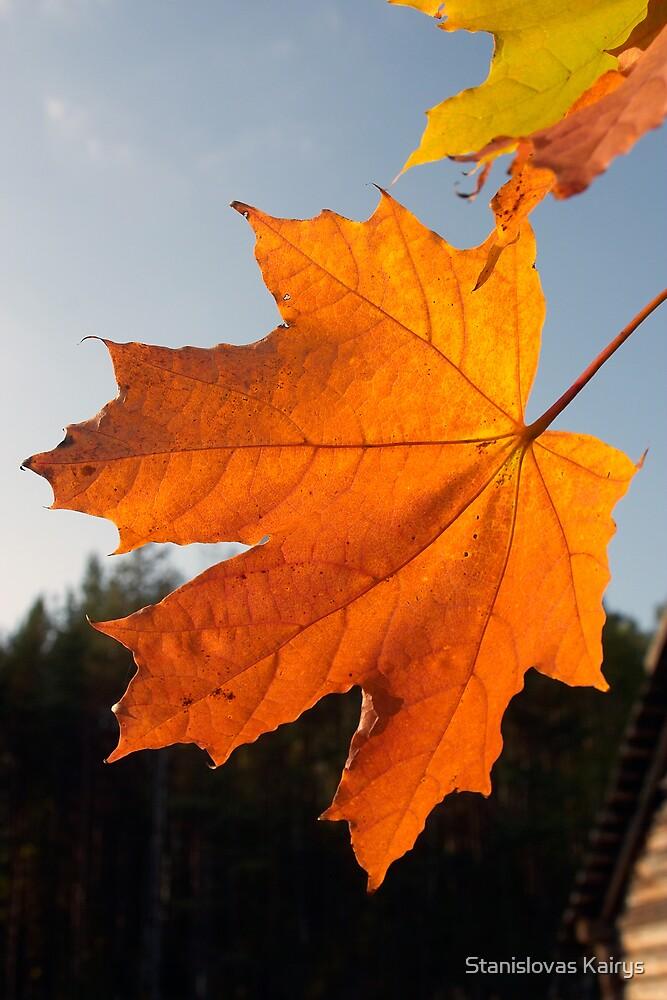 Autumn Light by Stanislovas Kairys