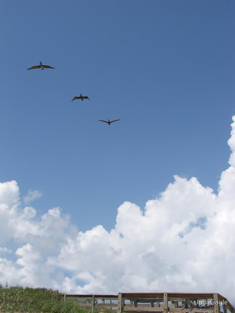 Three in Flight by Judy Gayle Waller