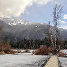 Winter's Wetlands by Tracy Friesen