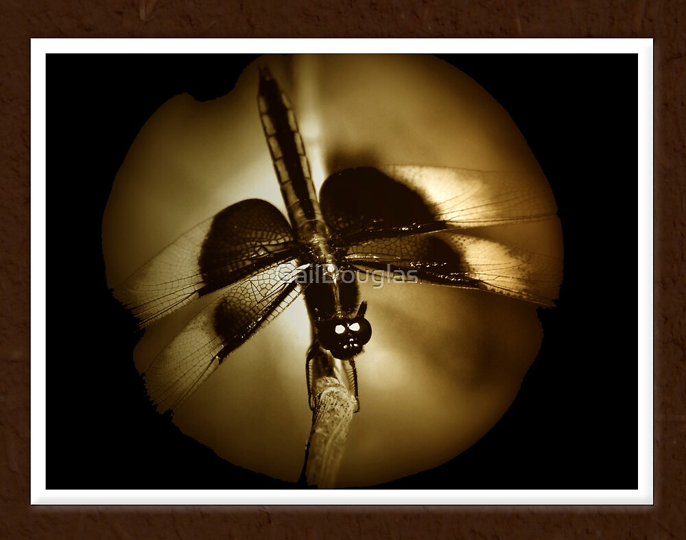 Dragonfly by GailDouglas