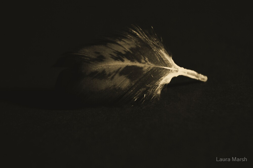 Feather by Laura Marsh