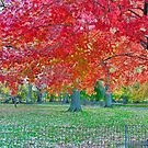 Autumn in Central Park by Barbara Manis
