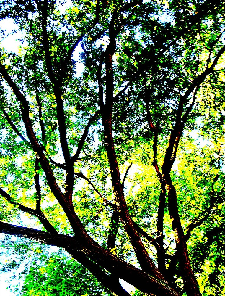 Branches by Tommy Seibold