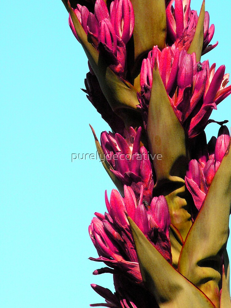 Agave flower by purelydecorative