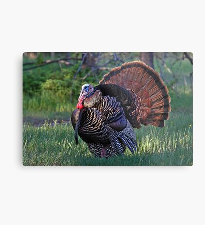 Tom Turkey - Wild Turkey Metal Print