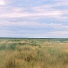 roebuck plains  by Elliot62