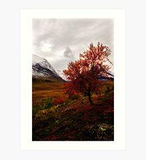 Intense Autumn Art Print
