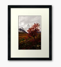 Intense Autumn Framed Print