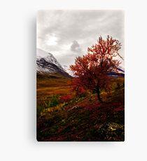 Intense Autumn Canvas Print