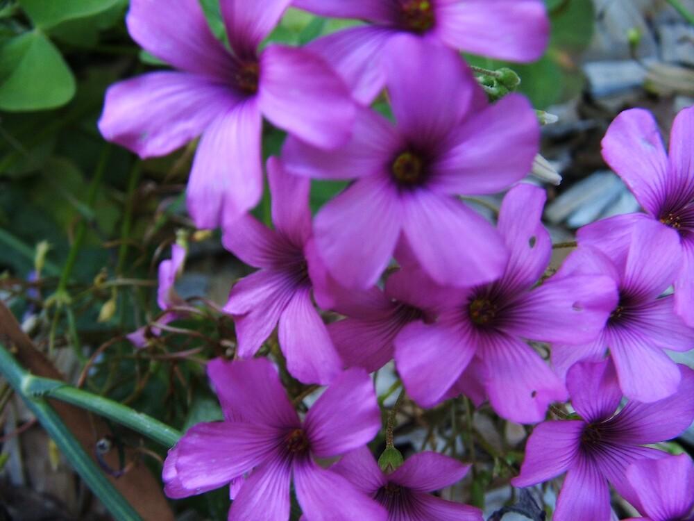 Tiny Flowers by bobbijo07