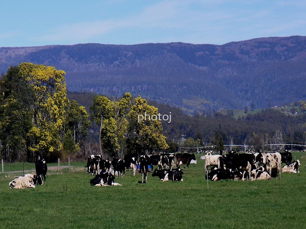 Tasmania, Meander Valley by photoj