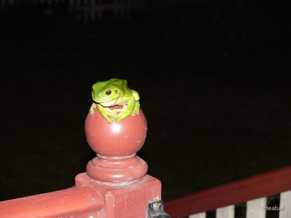 Green Frog by Heabar
