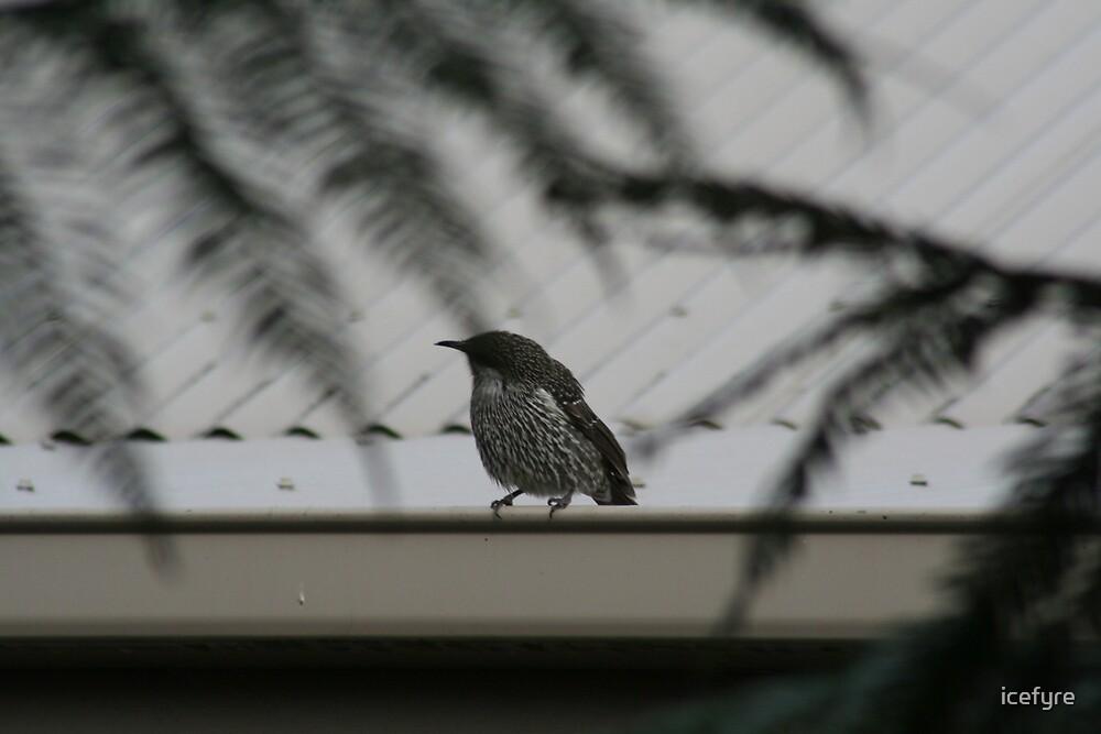 a bird by icefyre