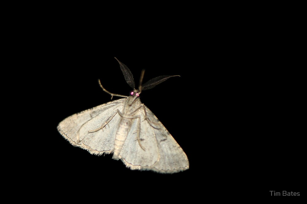 Moth On My Door by Tim Bates