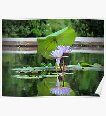 Umbrella Pad For Lilies Poster