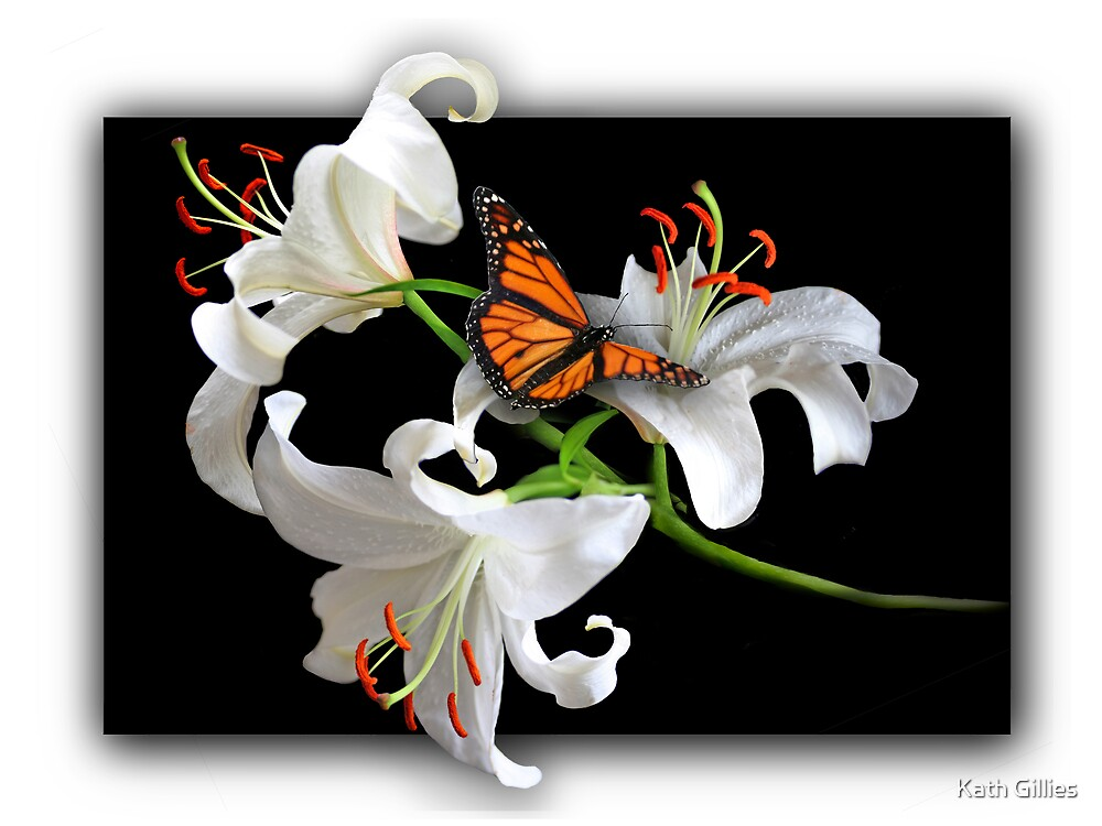 3 white liliums with butterfly by Kath Gillies