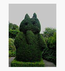 Topiary At Greenbank Gardens, Glasgow Photographic Print