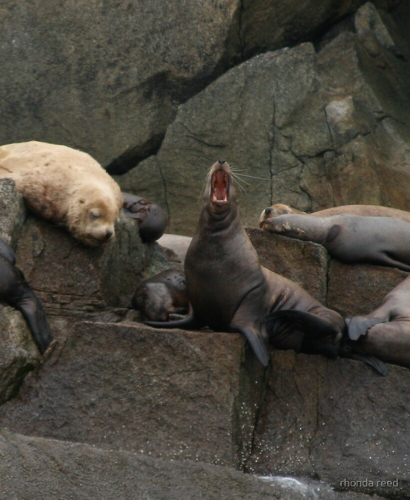 Sleepy Sea Lions by rhonda reed