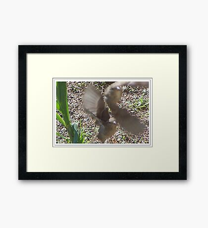 Two Fly Off Together Framed Print