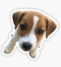 Jack Russell #1 Sticker