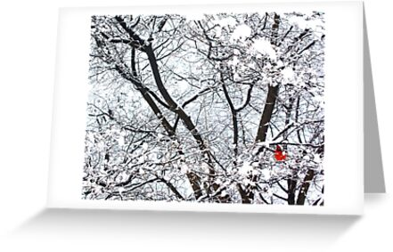 Cardinal in Winter (Central Park) by Anne McGrath