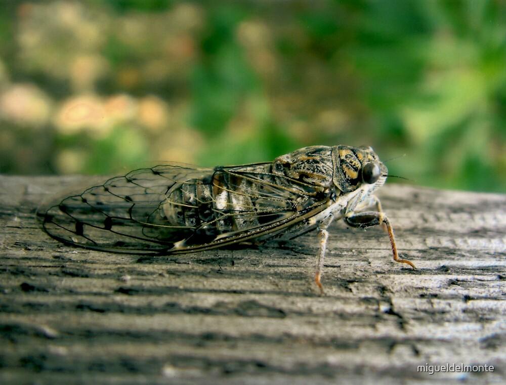 Cicada by migueldelmonte