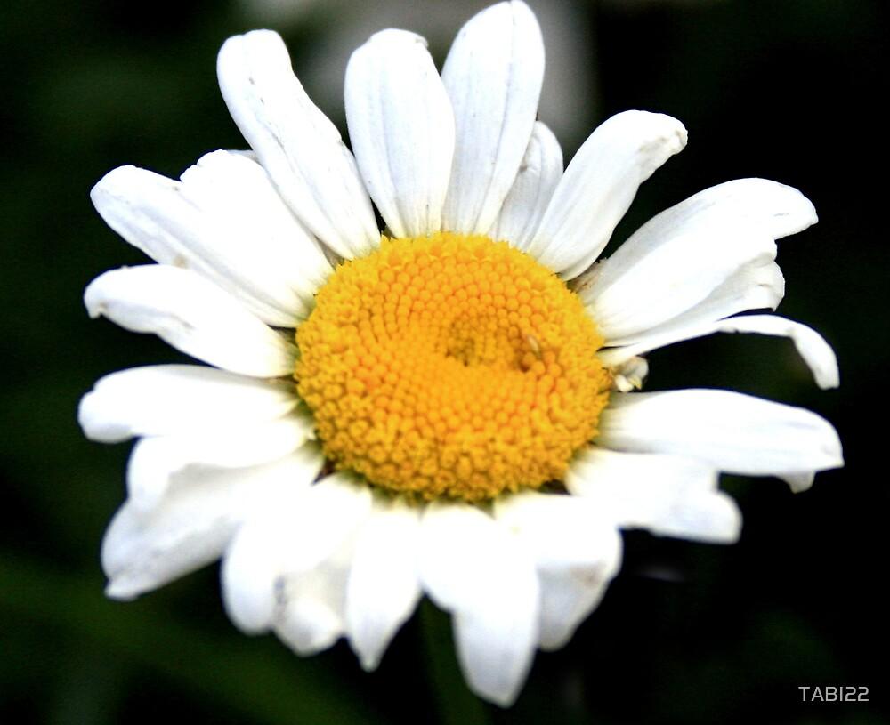 Daisy by TABI22