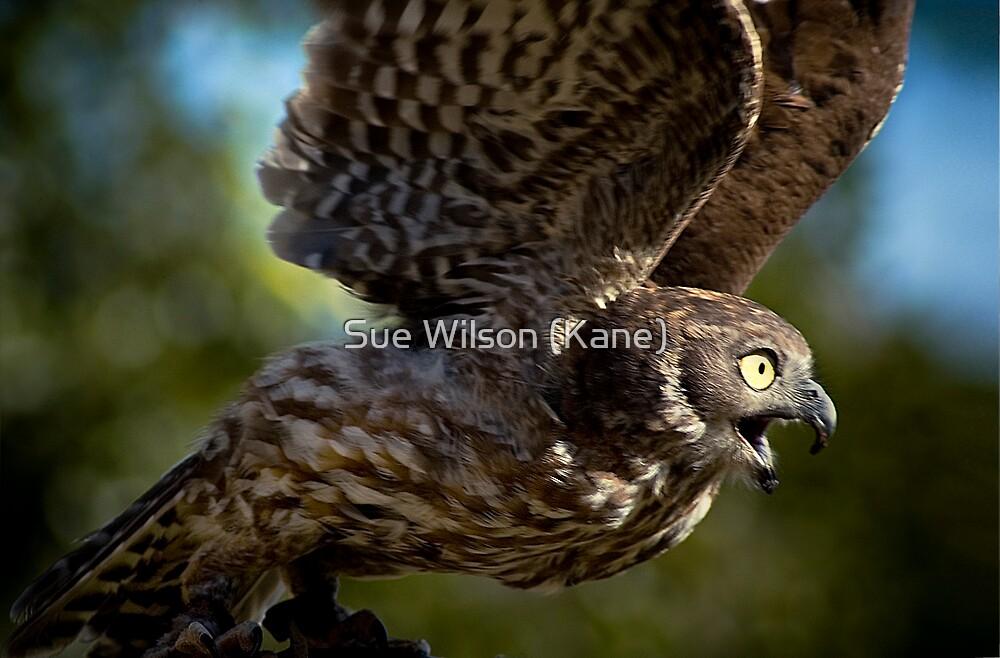 Take off by Sue Wilson (Kane)