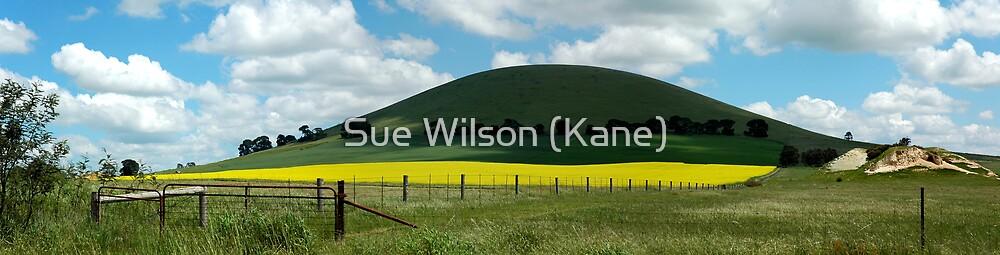 Canola Field by Sue Wilson (Kane)