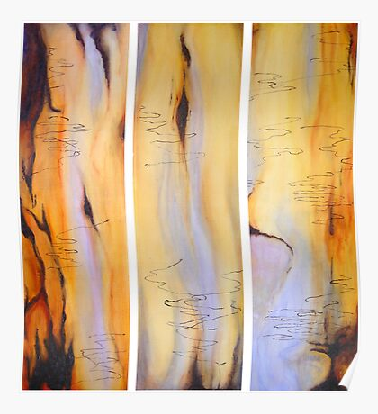 Scribbly Gum Tryptch Poster