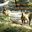 Banner -A Little Bit Country by EdsMum